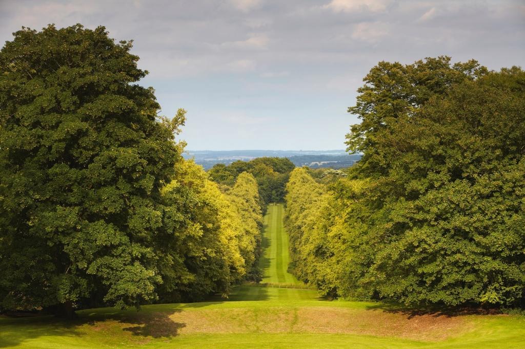 Lainston - Lime Walk