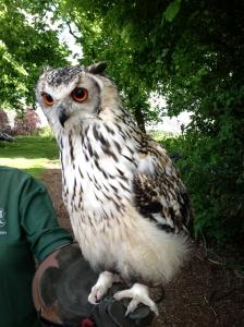 Lainston - owls