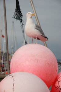 Seagull by Peter Robinson