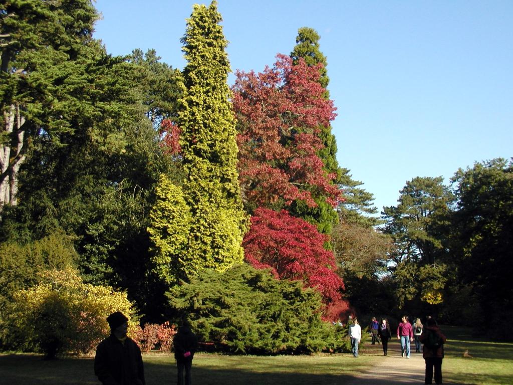 Westonbirt Treefest