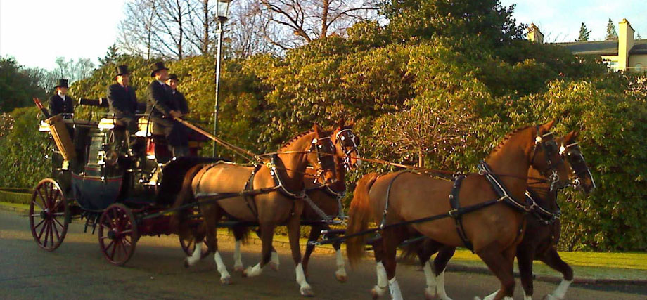 Carriage Driving at Gleneagles