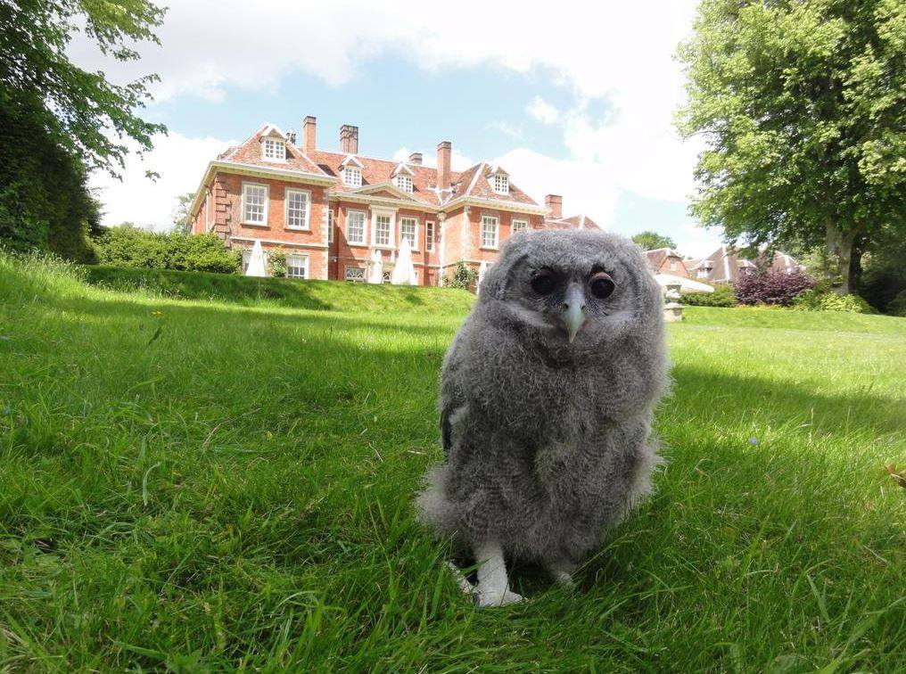 Eric the Owl at Lainston House