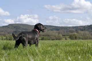Bovey Castle, Dartmoor, perfect for dogs