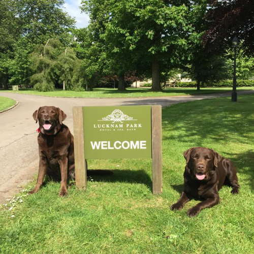 Dogs welcome at Lucknam Park