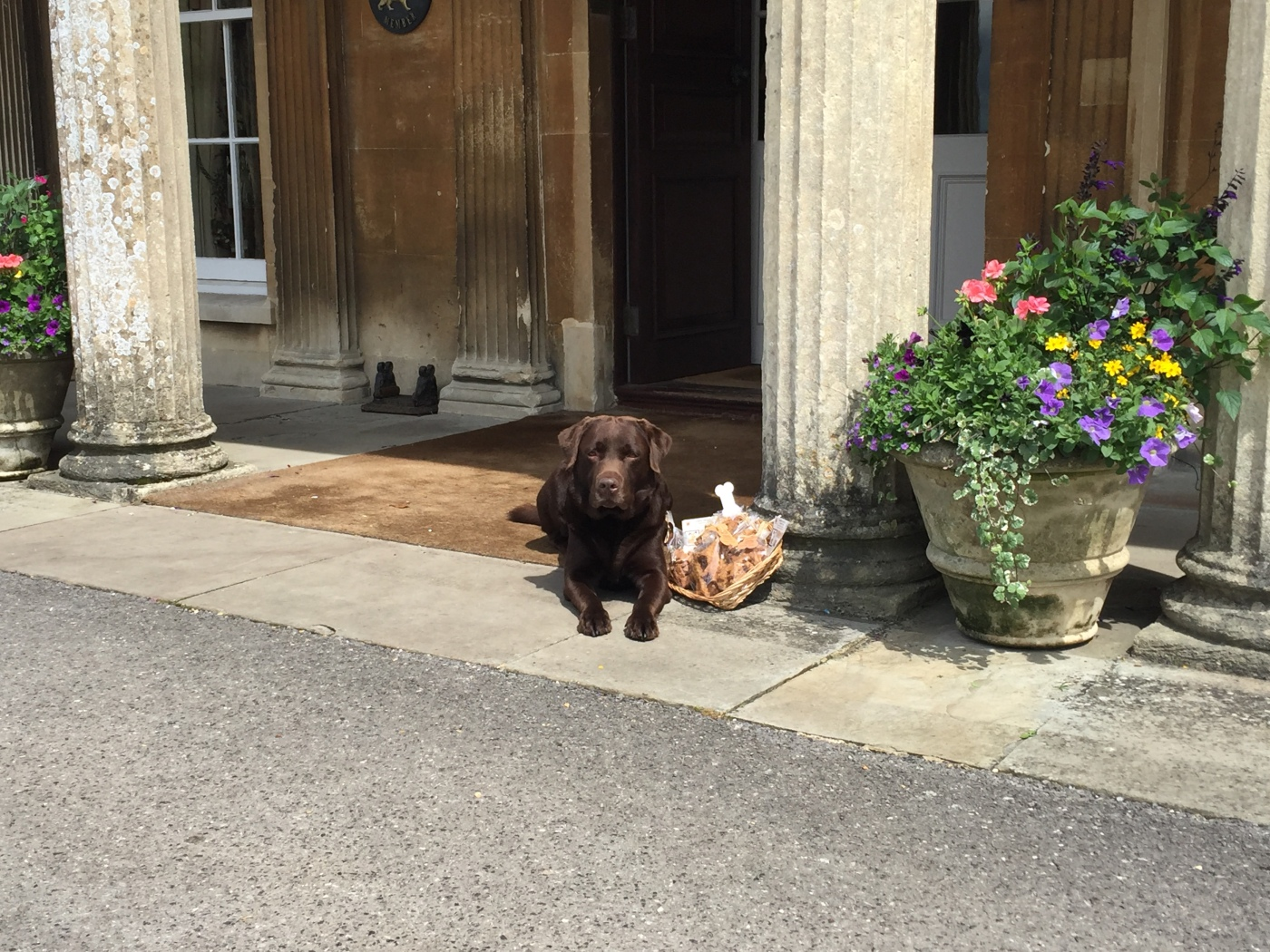 10 Of The Best Dog Friendly Luxury Hotels In The Uk The Lrg Blog